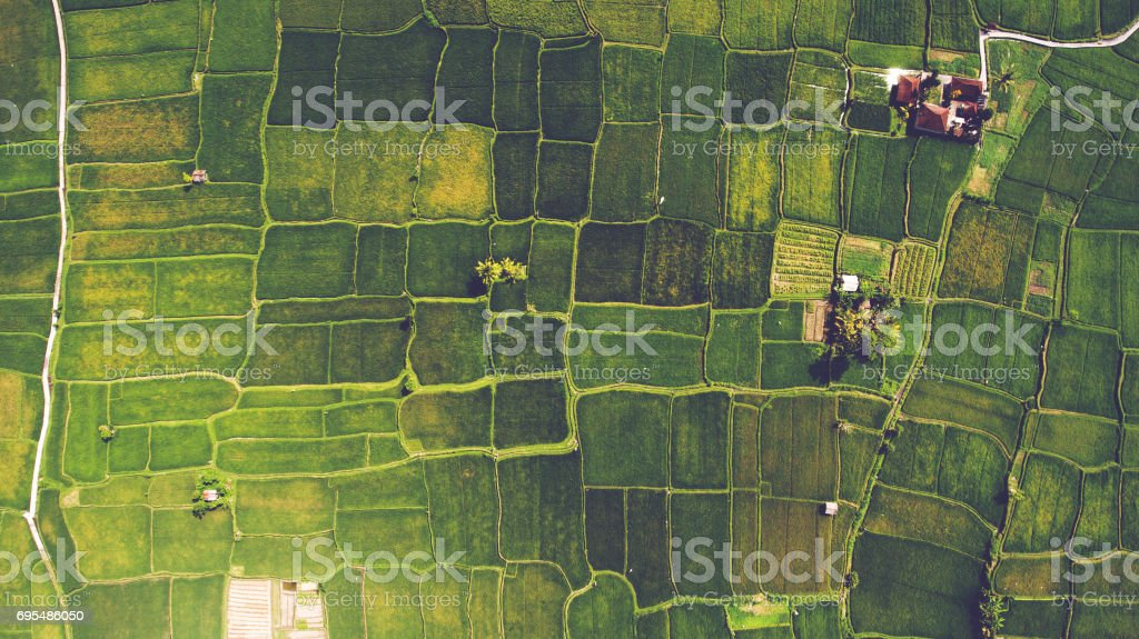 Aerial landscapes Top view from drone of the beautiful paddy fields with velvet green young sprouts in Balinese village. The traditional method for cultivating rice with flood the fields after setting young seedlings Aerial View Stock Photo