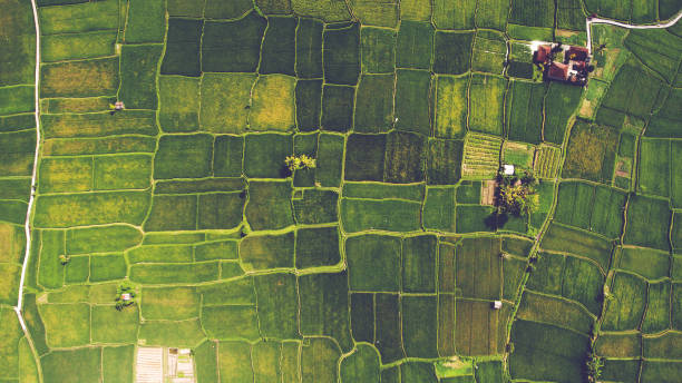 aerial landscapes - agriculture stock pictures, royalty-free photos & images