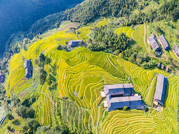 Aerial Longji Terraced Fields