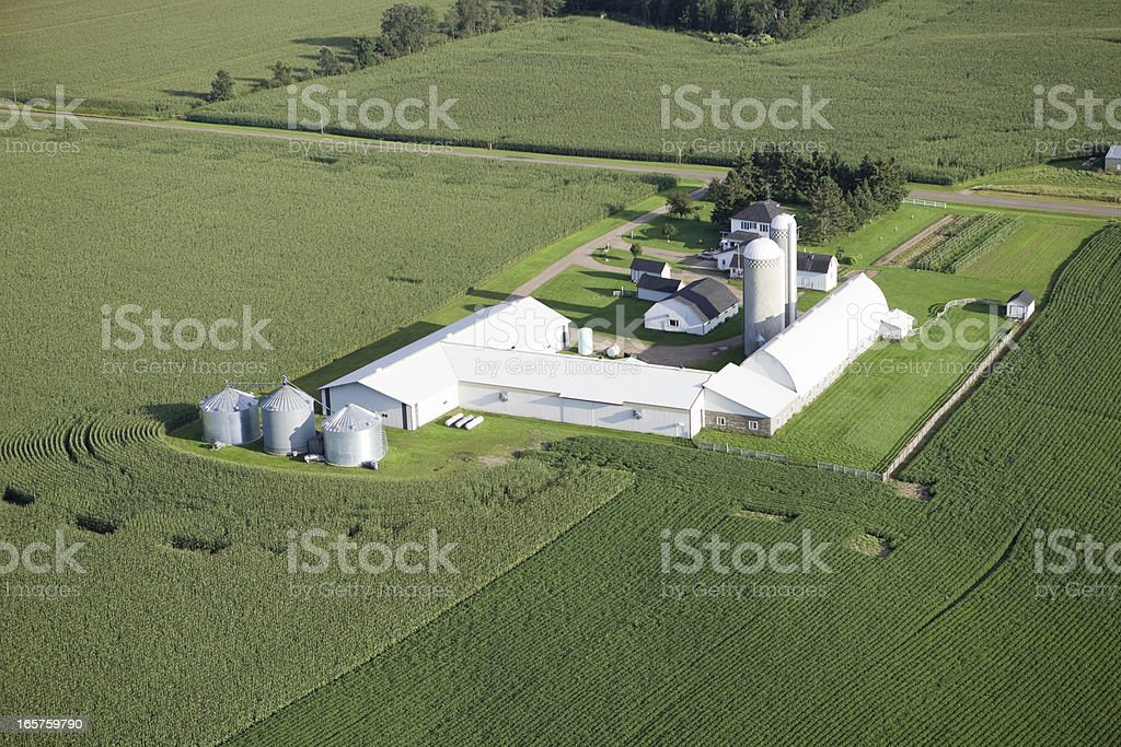 Aerial Mid-summer Farm Surrounded by Cornfields stock photo