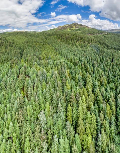 Luftaufnahme eines Waldes in Argyll – Foto