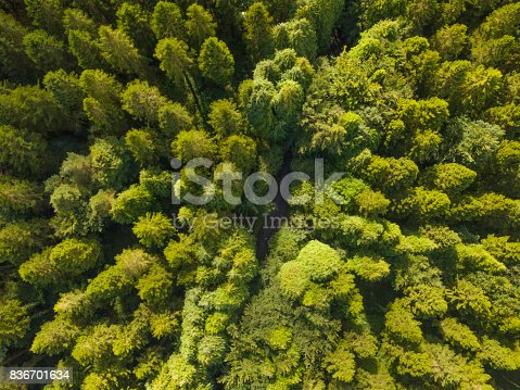 istock Aerial of a pine forest, Roscommon, Ireland. 836701634