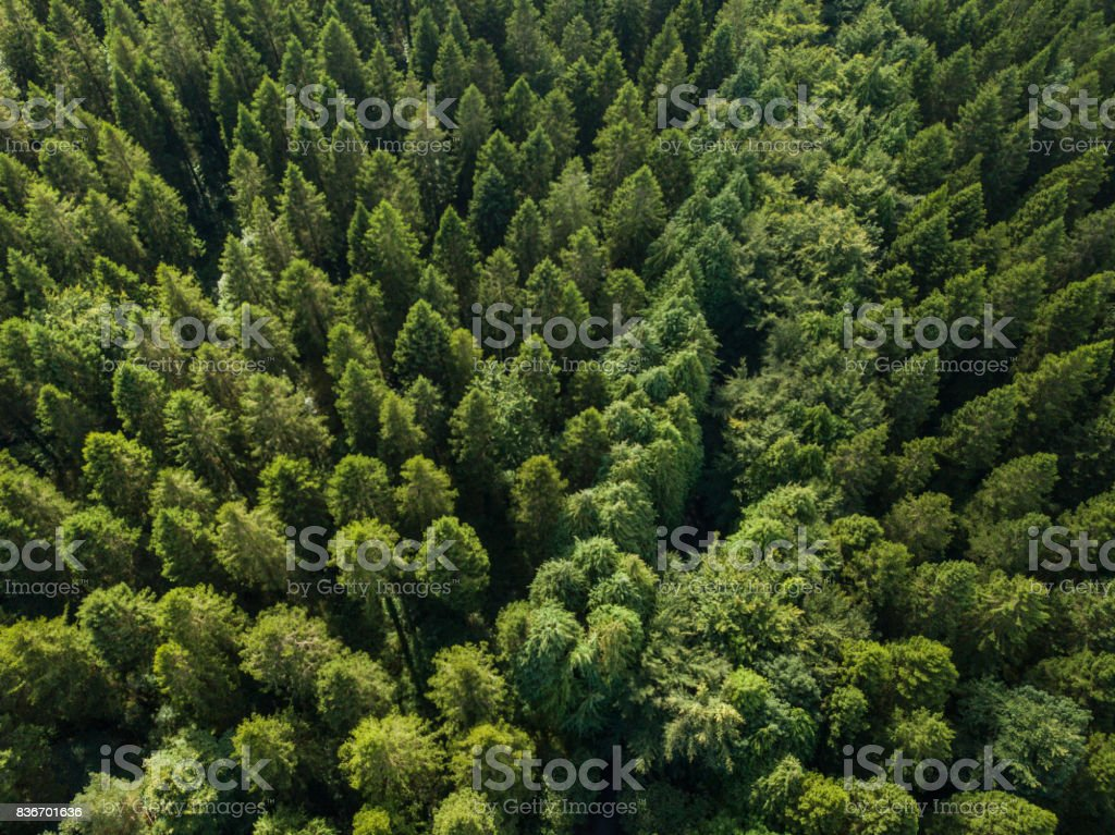 Aerial of a pine forest, Roscommon, Ireland. royalty-free stock photo