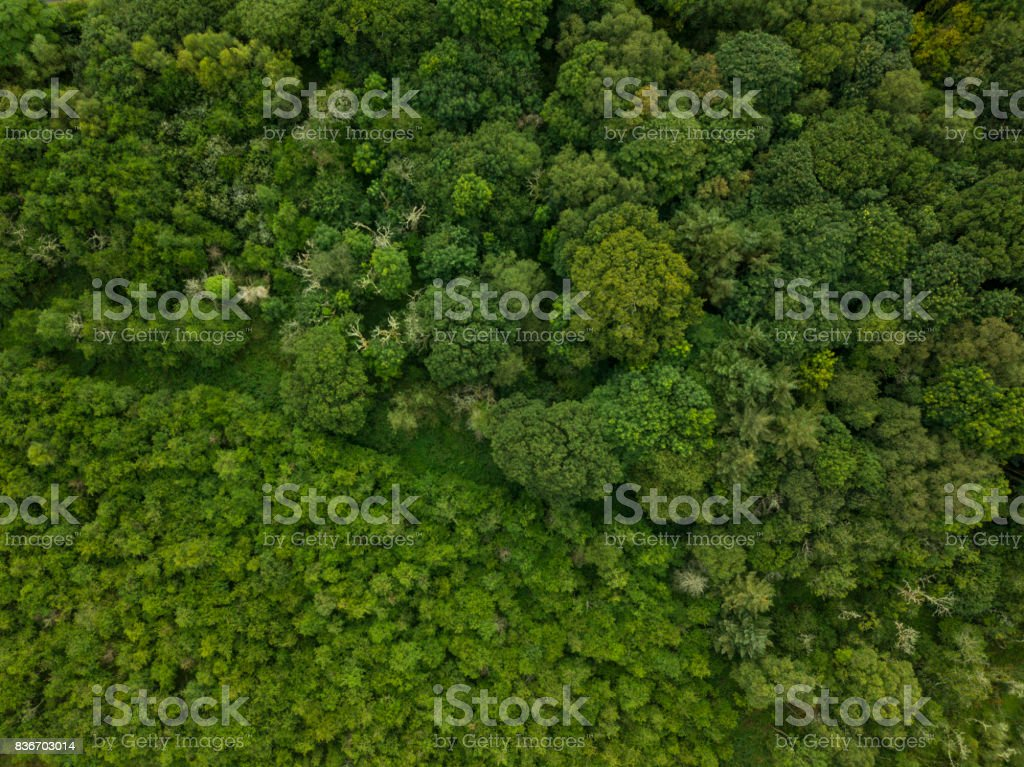Aerial of a pine forest, Roscommon, Ireland. stock photo