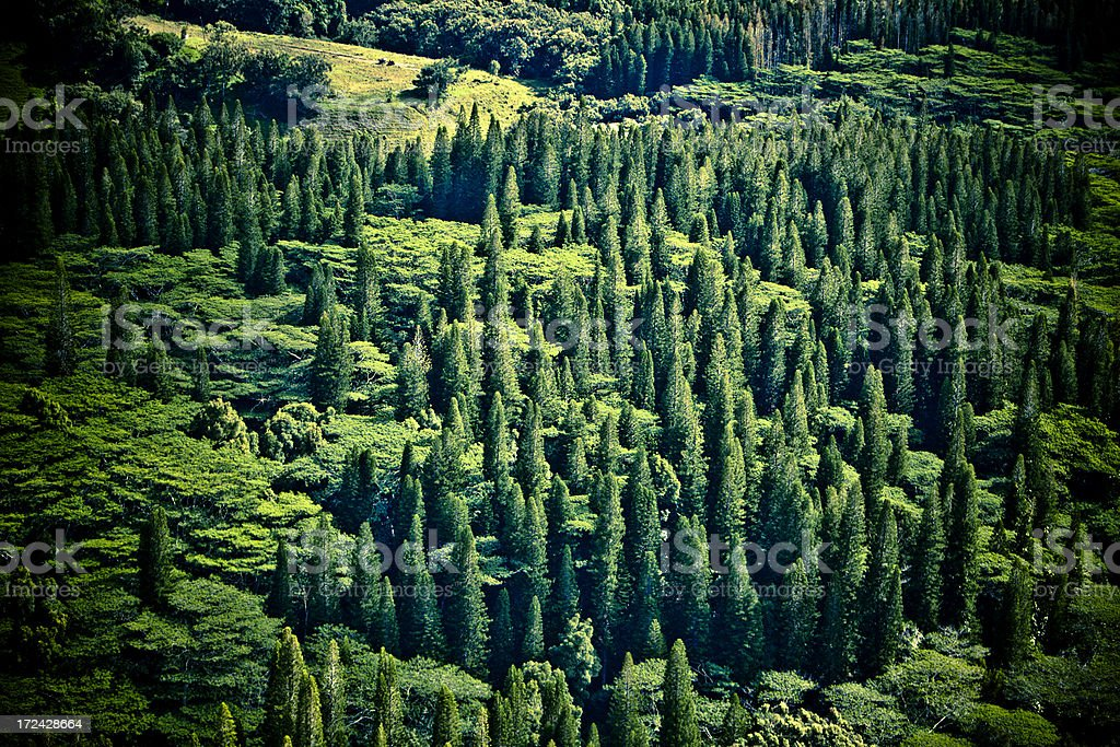 Aerial of an Evergreen Forest Hawaii royalty-free stock photo