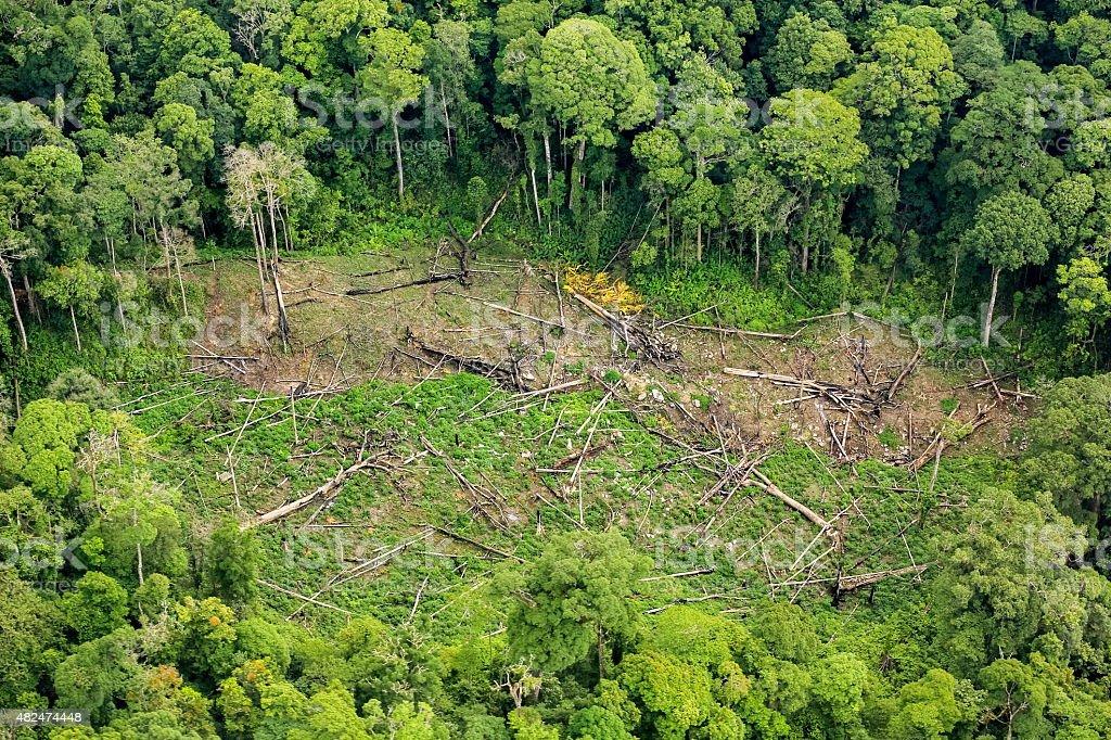 Luftaufnahme von-Bäume auf Boden im Regenwald - Lizenzfrei 2015 Stock-Foto