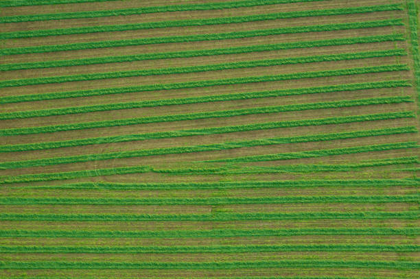 Aerial of Farmland stock photo
