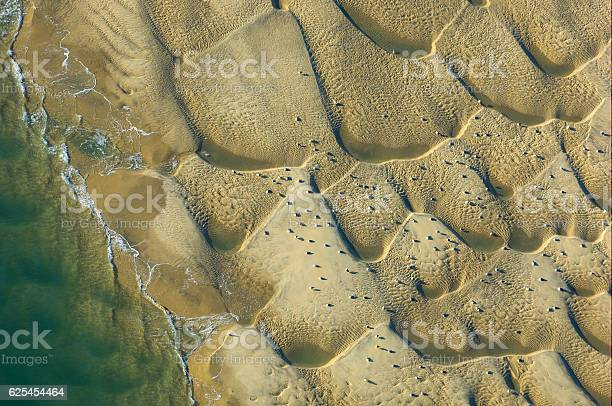 Aerial Of Sand Dunes And Birds In Domaine De Certes Stock Photo - Download Image Now