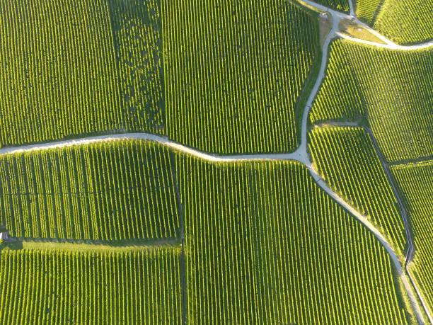 Aerial of Vineyard fields between Lausanne and Geneva in Switzerland stock photo