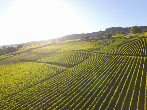 Aerial of Vineyard fields between Lausanne and Geneva in Switzerland