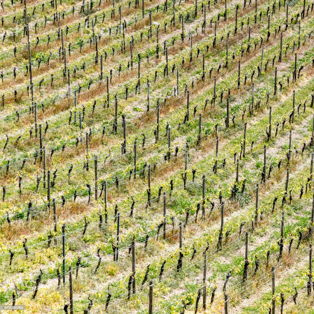 aerial of vineyard in spring with growing vine prages royalty-free stock photo