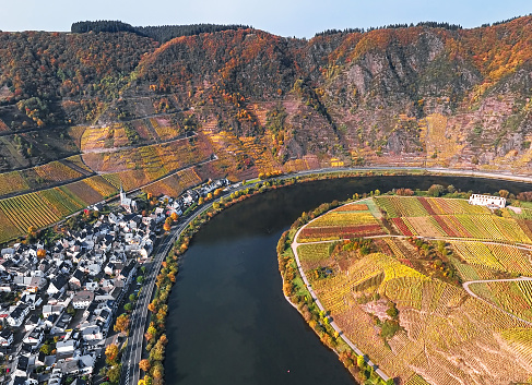 Aerial of Vineyards in Mosel loop near Bremm at autumn, Rhineland-Palatinate, Germany