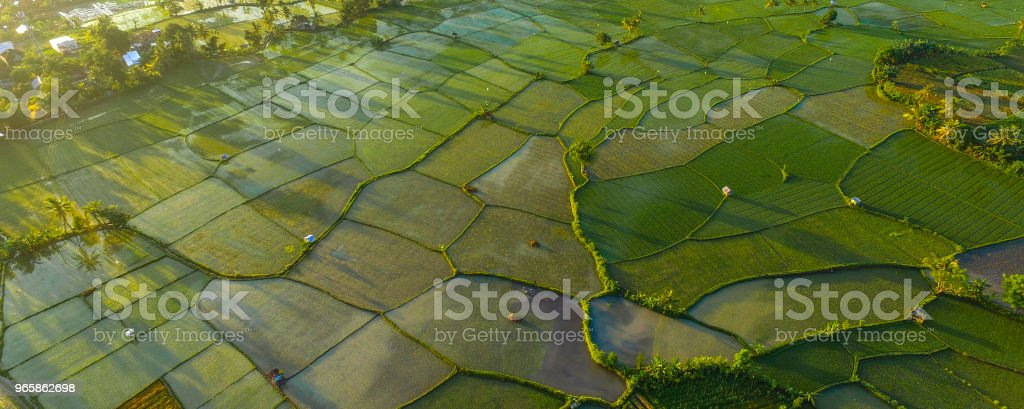 Aerial Paddy Field in the Morning - Royalty-free Abstract Stock Photo