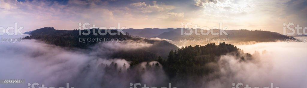 Aerial Panorama of California Coastal Redwoods stock photo