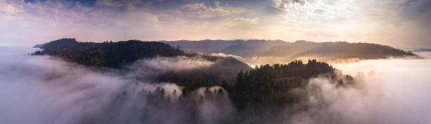Aerial Panorama of California Coastal Redwoods Aerial panorama of the coastal redwoods of Northern California poking out of the mist at sunrise. redwood tree stock pictures, royalty-free photos & images