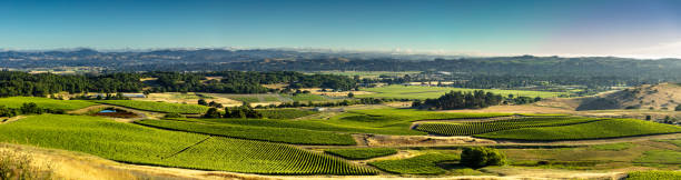 aerial panorama of gorgeous grape growing valley in california - halbergman stock pictures, royalty-free photos & images