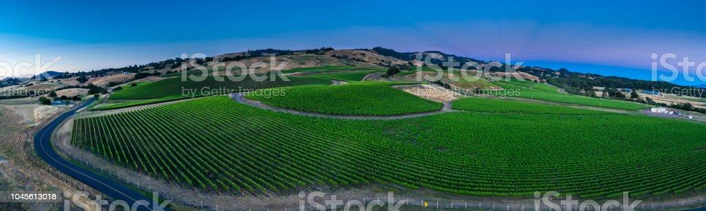 Aerial Panorama of Vineyard at Twilight stock photo