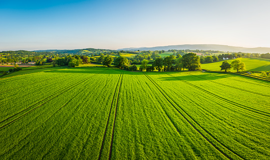 Aerial panorama over healthy green crops in patchwork pasture farmland