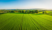 istock Aerial panorama over healthy green crops in patchwork pasture farmland 692869260