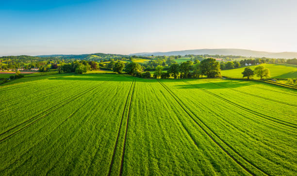 aerial panorama over healthy green crops in patchwork pasture farmland - field stock photos and pictures