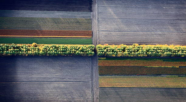 Aerial photo. Cultivation of tree seedlings stock photo