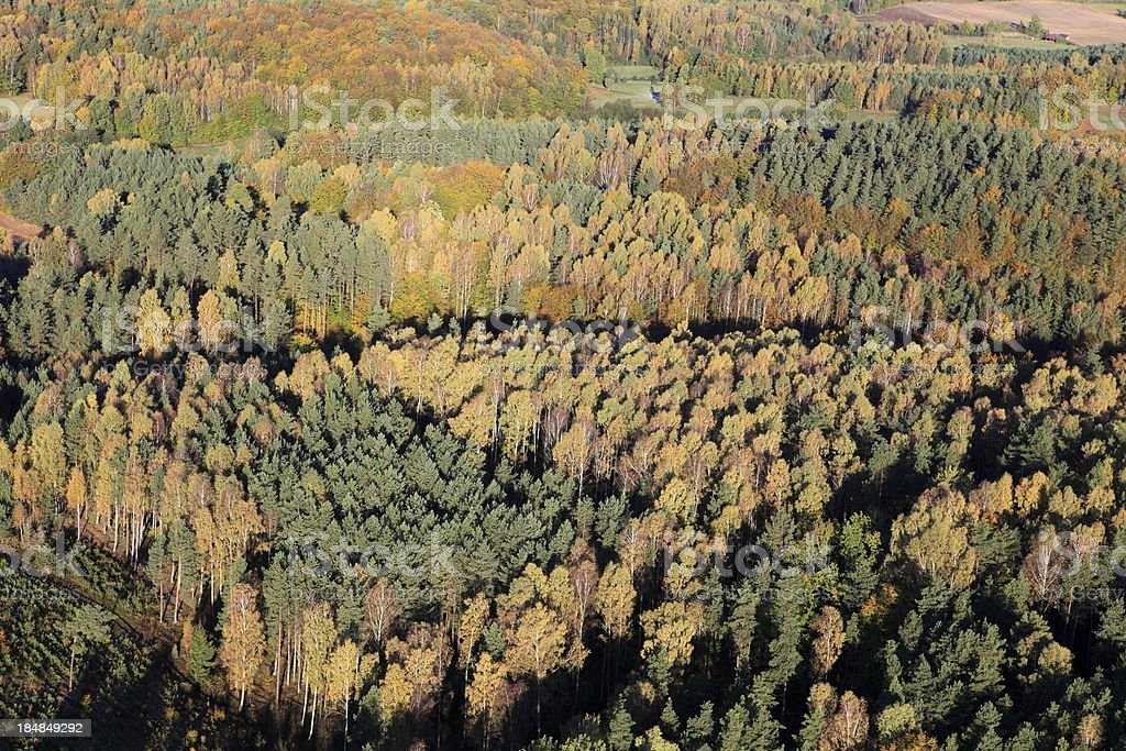 Aerial photo of a autumn forest stock photo