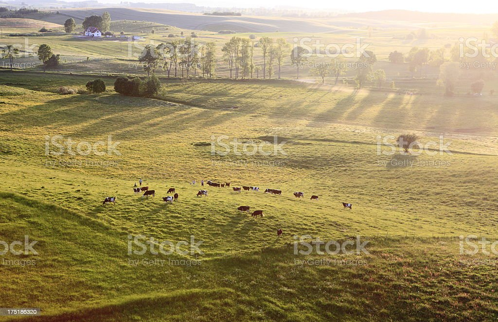 Aerial photo of a Meadow stock photo