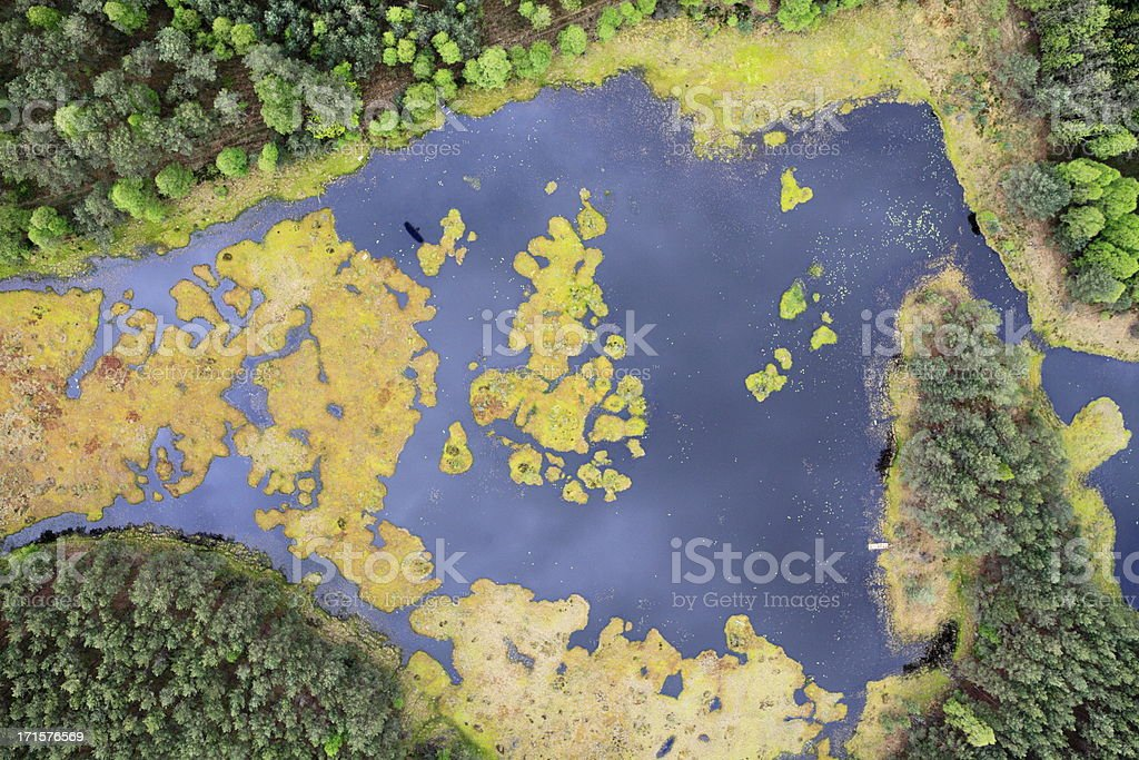 Aerial photo of a swamp. Spring