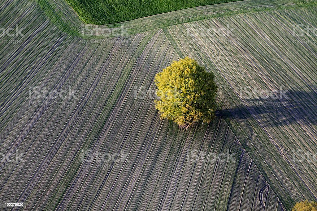 Aerial photo of a tree. Spring stock photo