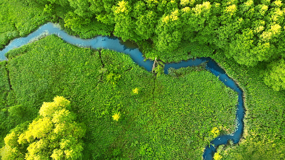 Aerial photo of estuary. View above of a fragment of a forest river. Background for  a fishing theme.