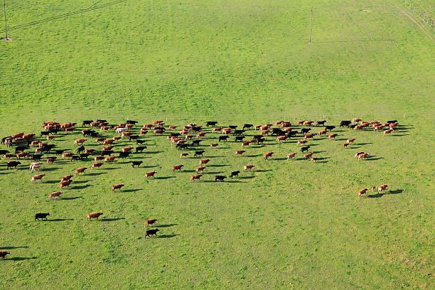 Aerial photo of farm animal stock photo