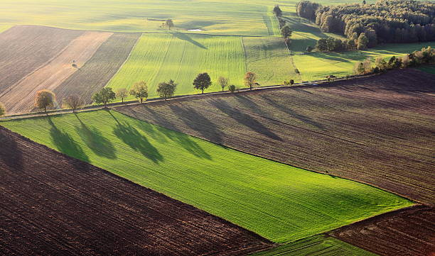 Aerial photo of farm landscape with row of trees stock photo