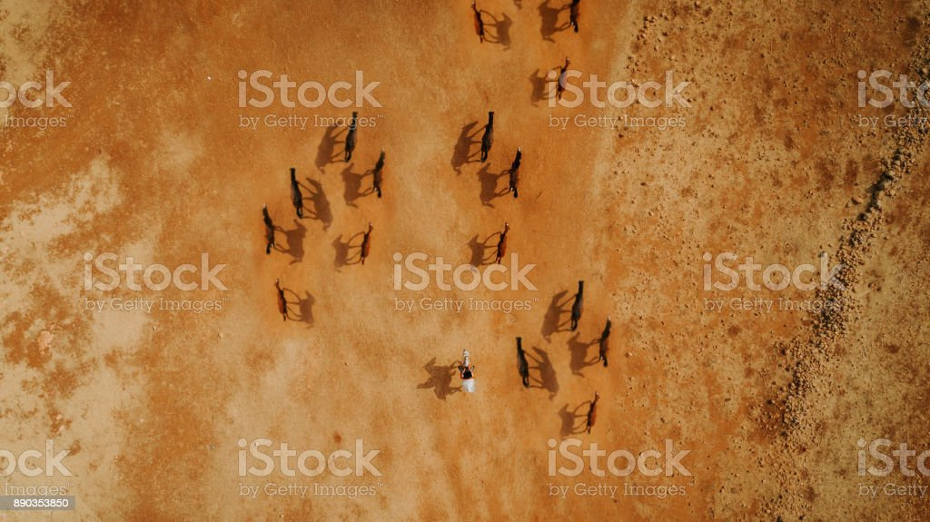 Aerial photo of horses eating hay on sunny summer day, top view high altitude stock photo