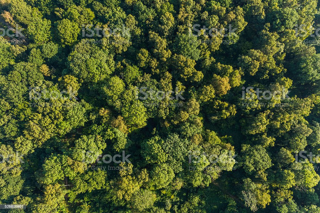 Aerial photo of vibrant green forest foliage woodland trees stock photo