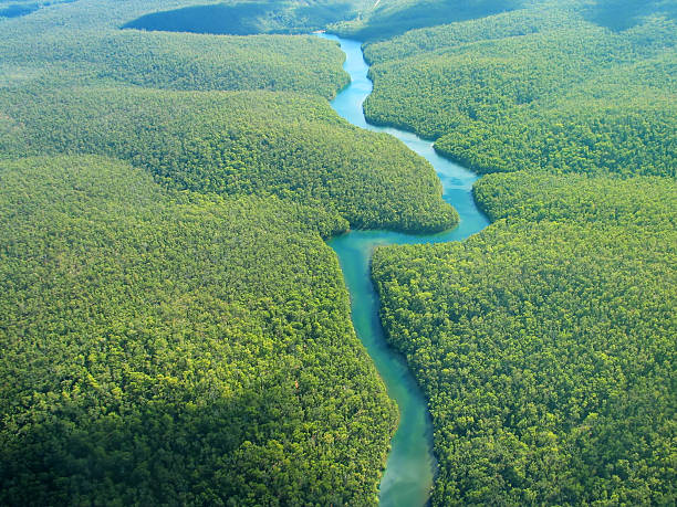 Aerial Photo Aerial Photography - The River amazon river stock pictures, royalty-free photos & images