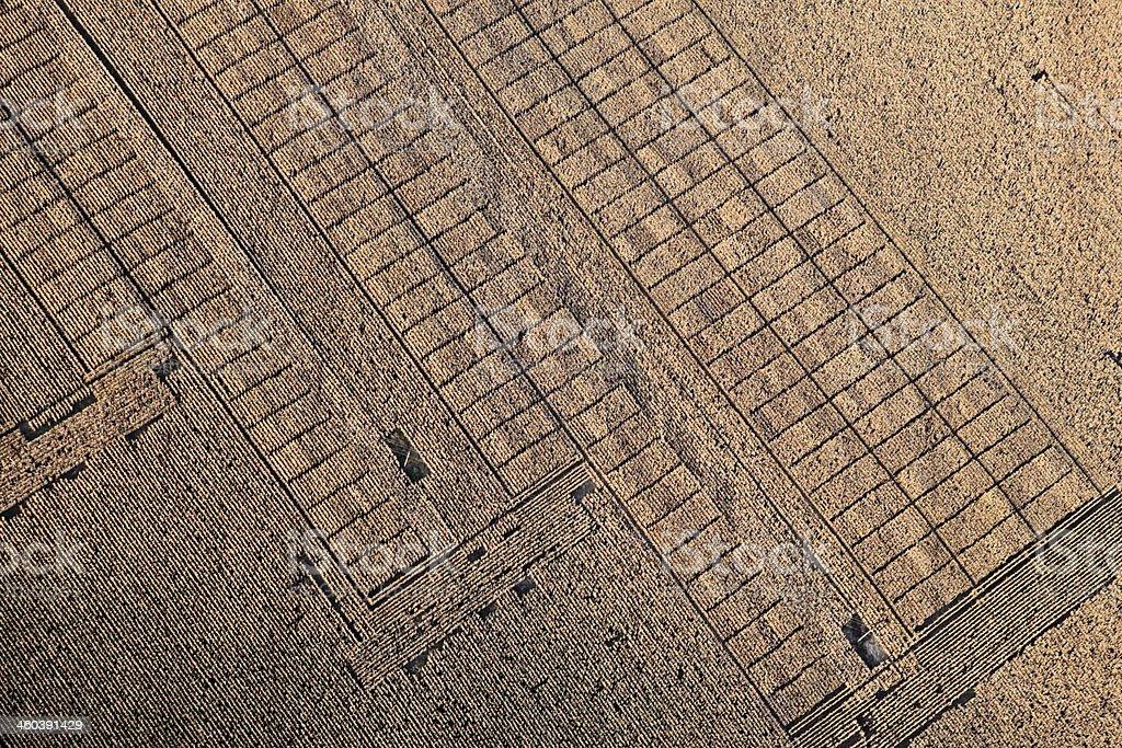 Foto aérea.  A experimental campo de milho - foto de acervo