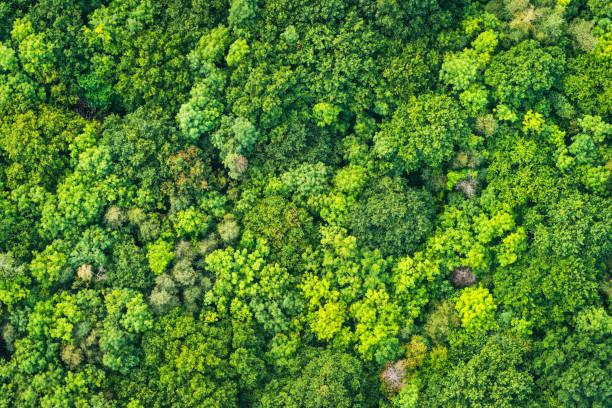 luftaufnahme lebendige grüne baum baldachin naturwald hintergrund - baumgruppe stock-fotos und bilder