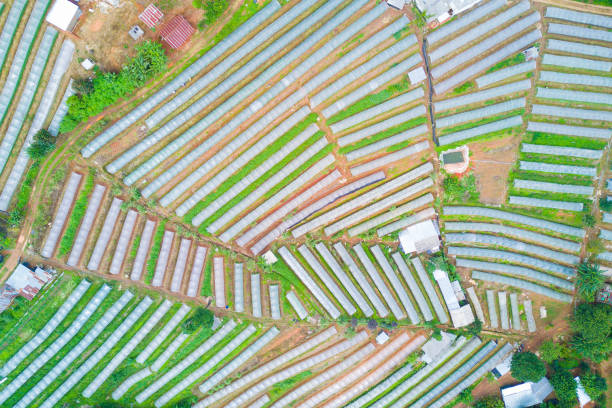 aerial photography beautiful view of vegetable plots with clear plastic in the mountain for agriculture concept. stock photo