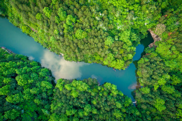 Aerial photography forest stock photo