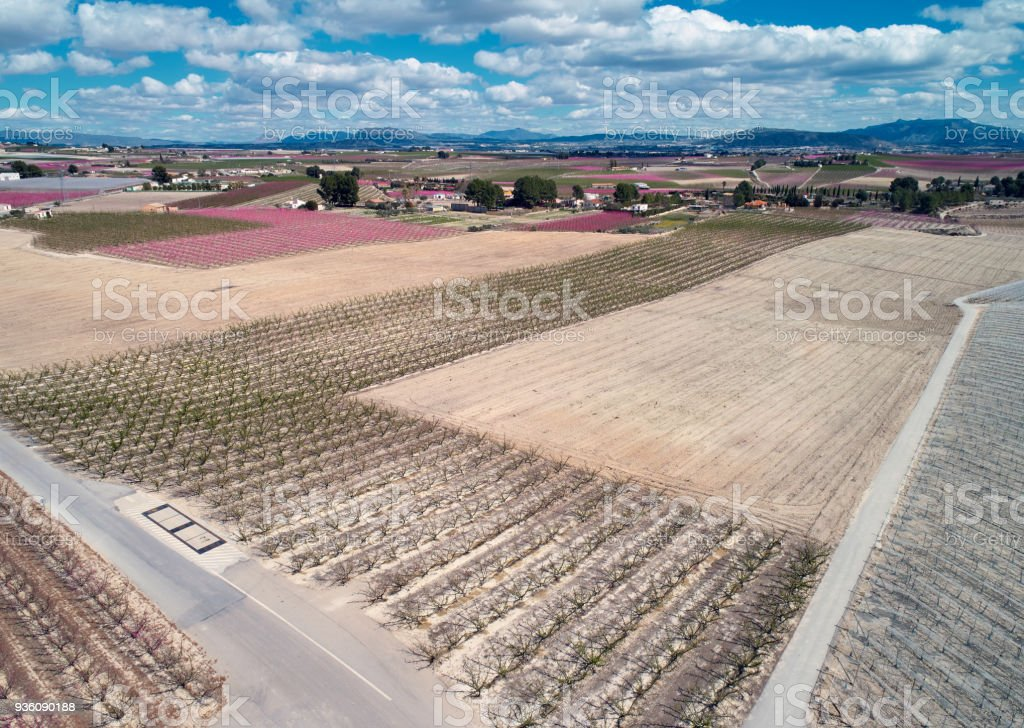 Aerial photography of a blossoming fruit trees in Cieza stock photo