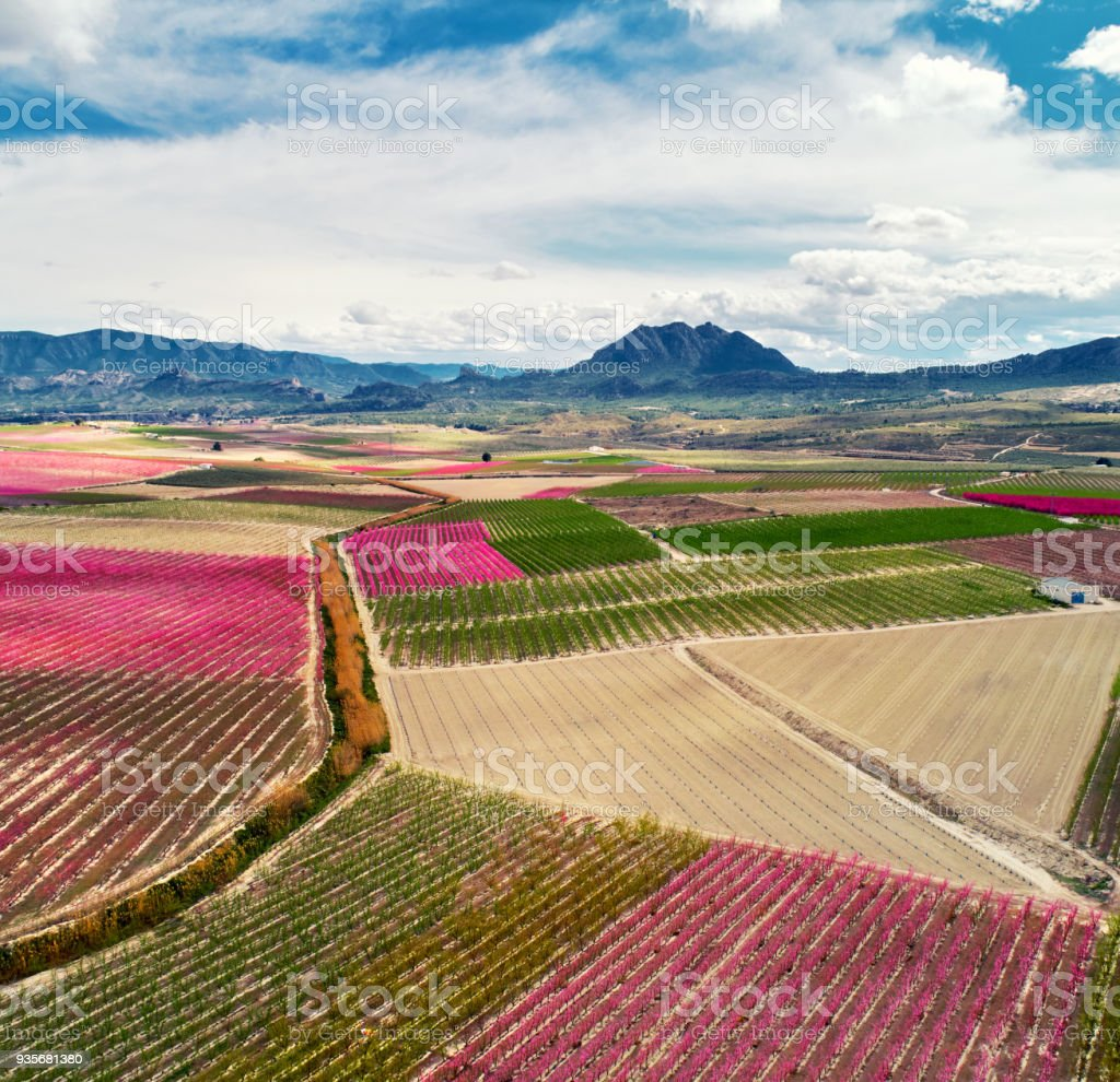 Aerial photography of a blossoming of fruit trees in Cieza stock photo