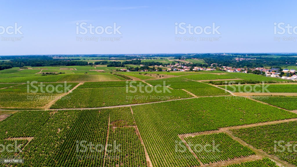 Aerial photography of vineyards in Monnieres stock photo