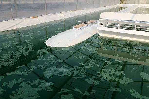 aerial shot of a spirulina farm - spirulinabakterie bildbanksfoton och bilder