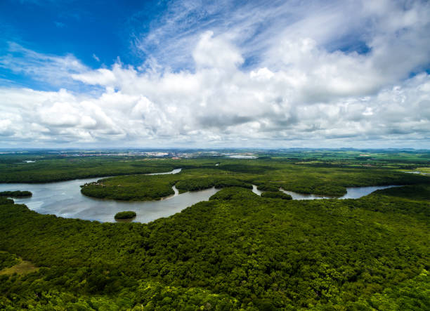 Aerial Shot of Amazon rainforest in Brazil, South America Aerial Shot of Amazon rainforest in Brazil, South America amazon river stock pictures, royalty-free photos & images
