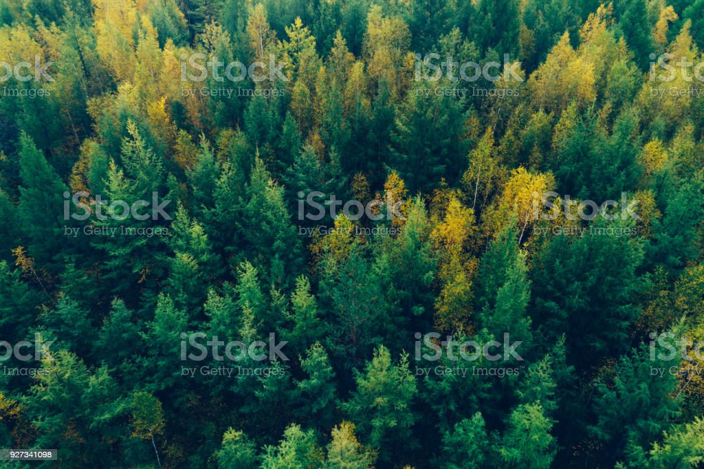 aerial shot of autumn forest landscape – zdjęcie