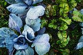 An aerial shot of various organic vegetables on a small urban farm plot.