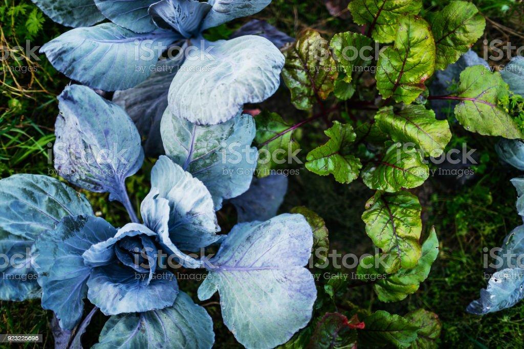 Aerial Shot Of Organic Vegetables On Farm Plot stock photo