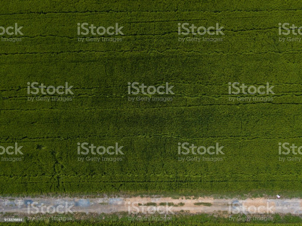 aerial shot of rice field stock photo