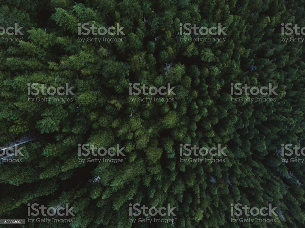 Aerial shot of trees stock photo
