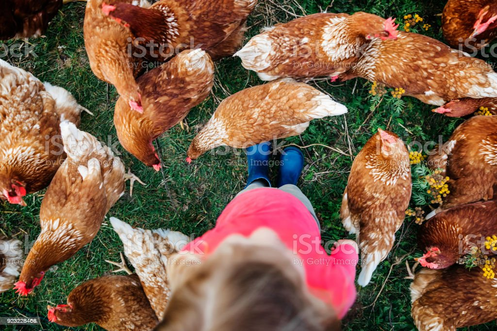 Aerial Shot Of Young Girl Standing Amongst Flock Of Chickens stock photo